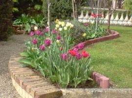 Tulipes au gîte Clos des Gardons